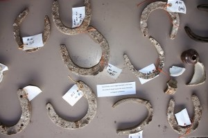 A number of labelled horseshoes found on the dig. [Richard Osgood; Crown Copyright]