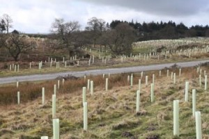 Trees planted in Catterick Training Area as part of the collaboration between DIO and Woodland Trust. [Crown Copyright]