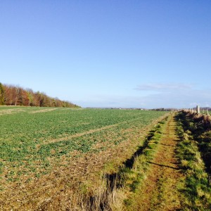Proposed site of new Service Family Accommodation at Bulford (Crown Copyright/MOD2015)