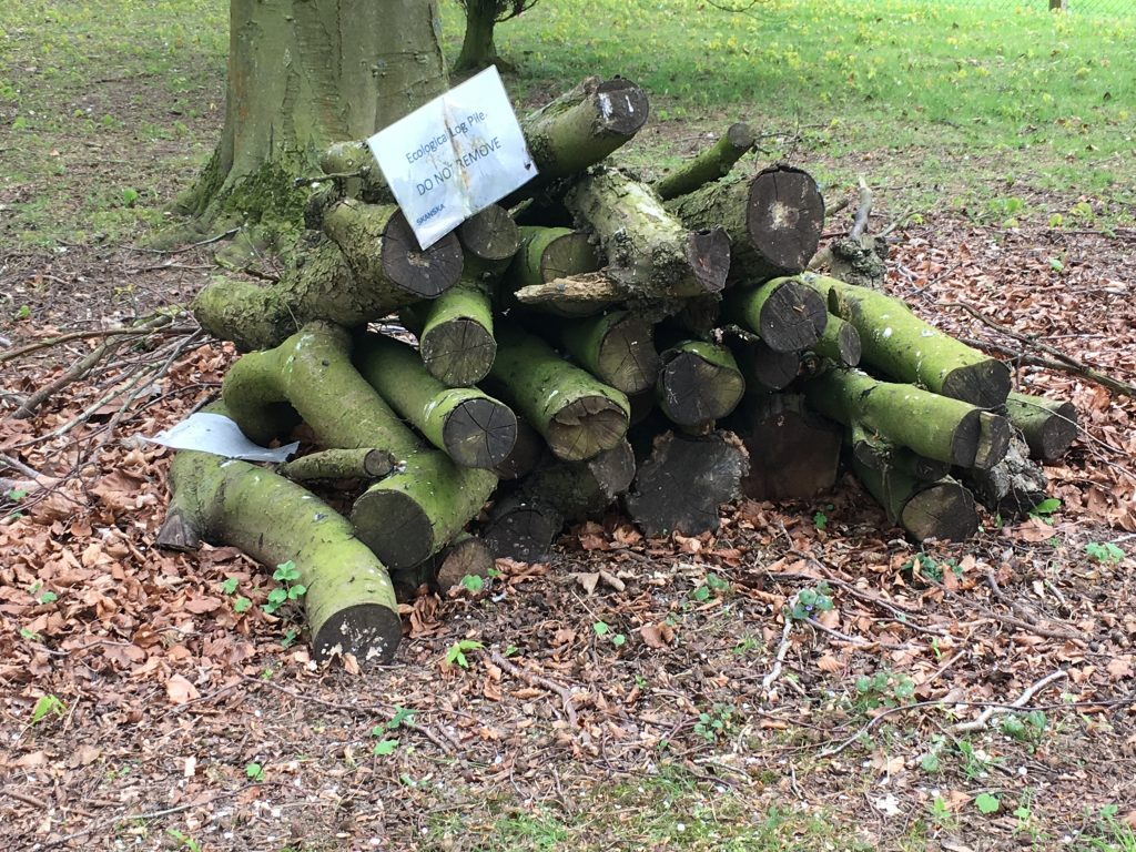 A log pile forming a habitat for invertebrates. [Skanska]