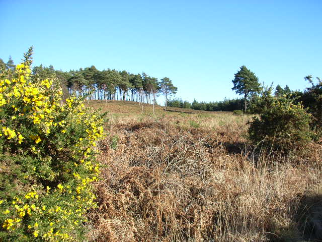 Bagshot Heath [© Andrew Smith (cc-by-sa/2.0) via http://www.geograph.org.uk/photo/115298]