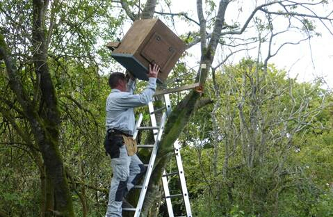 Volunteers installing a nest box. [All rights reserved]