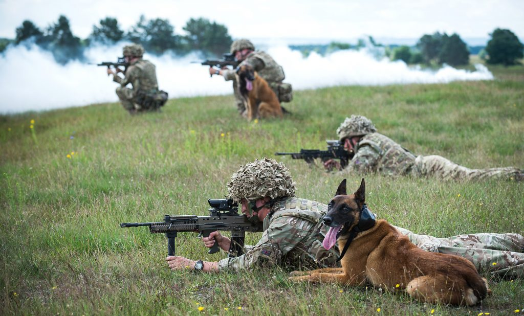 Dogs and their handlers from 102 Military Working Dogs Sqn taking part in a live fire exercise on the Sennelager Ranges in Germany. [Crown Copyright/MOD 2016]