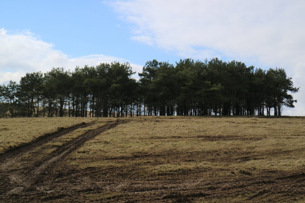 An image of Salisbury Plain, showing grassland with muddy vehicle tracks leading to a copse of trees.