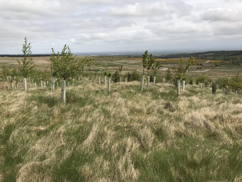 The Catterick Training Area is covered in green and yellow field. There are some wooden piles with small trees on to grow trees on the training area.